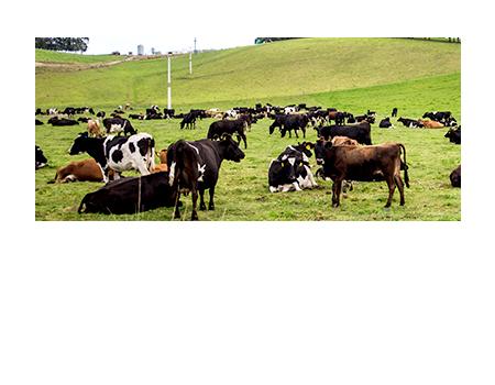 Venta Bebederos para Animales precio y capacidad